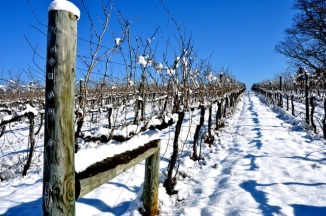 Keswick_Vineyards_Snowfall