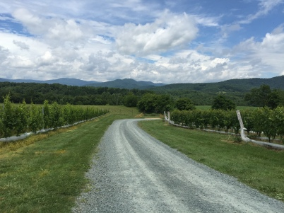 StinsonVineyards_View